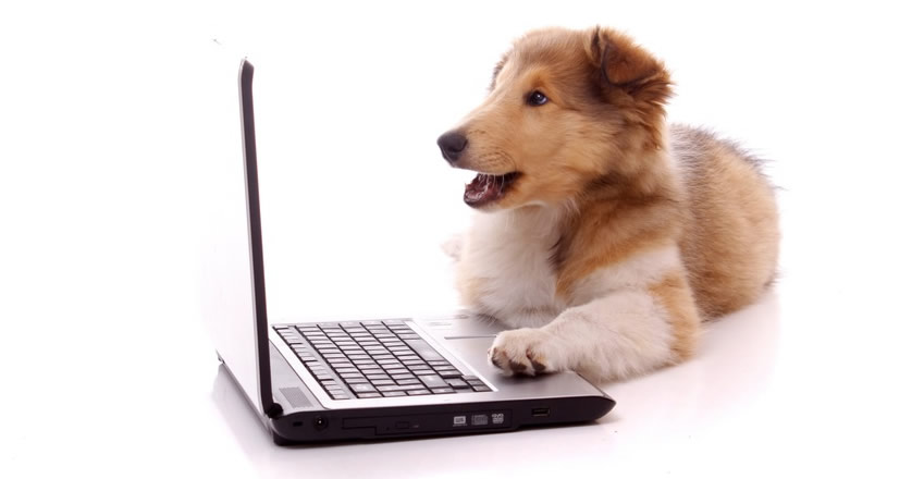 collie on laptop