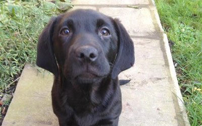 *Meet Molly the super sniffer dog!*