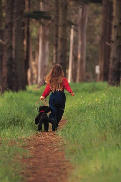 walking dog in woods