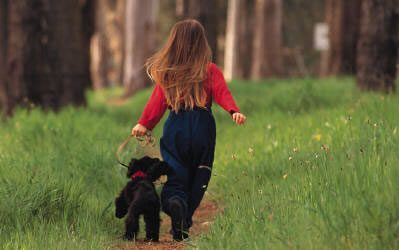 Is Alabama Rot a worry in your dog?