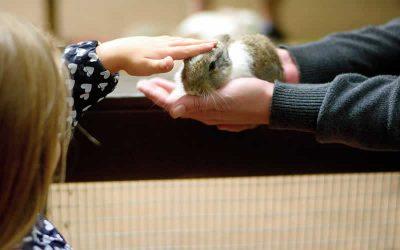 Free rabbit health checks in June!