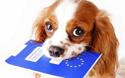 Travelling to the EU with your pet