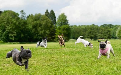 Kennel Cough Outbreak